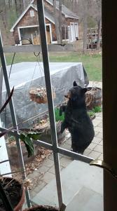 bear 4-26-15